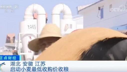 三省启动小麦最低收购价收粮 收购进度处于正常水平