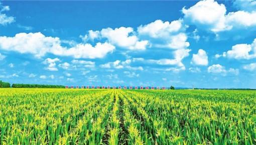深耕幸福土地 共筑美丽乡村——梨树县推广黑土地保护性耕作掠影