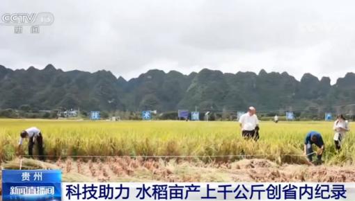 科技助力 | 貴州:水稻畝產上千公斤創省內紀錄