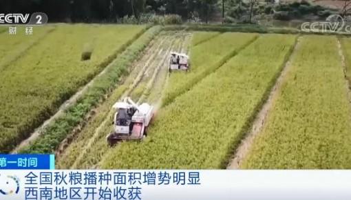 全国秋粮播种面积增势明显 丰收有基础