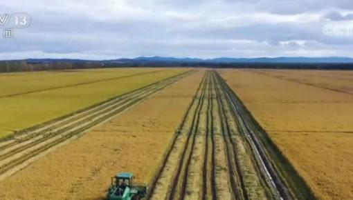 秋粮丰收成定局 全年产量1.3万亿斤以上