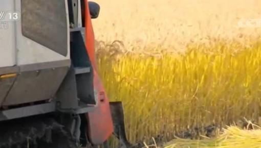 农业农村部:采取多种举措 确保我国水稻产量稳定在2亿吨以上