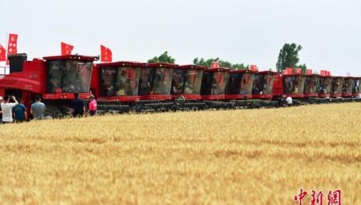2020年全國秋冬種種子供應充足 小麥種子價格同比下降