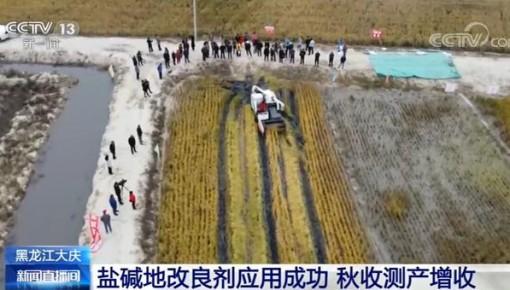 黑龍江大慶:鹽堿地改良劑應用成功 秋收測產增收