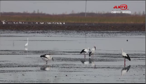 微视频丨吉林莫莫格国家级自然保护区