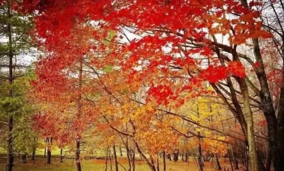 吉林省3地入选全国百个乡村游景点,在你家附近吗?