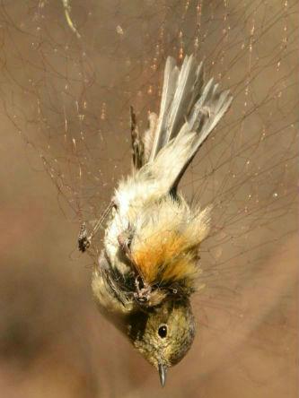 我是一只小小鸟 春天来了却再也飞不上树梢