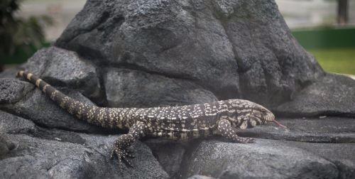 长春农博园增设爬行动物展区