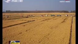 吉林省秋粮已收获超八成